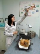 Клиника для животных Харьков. Вызов ветеринара
